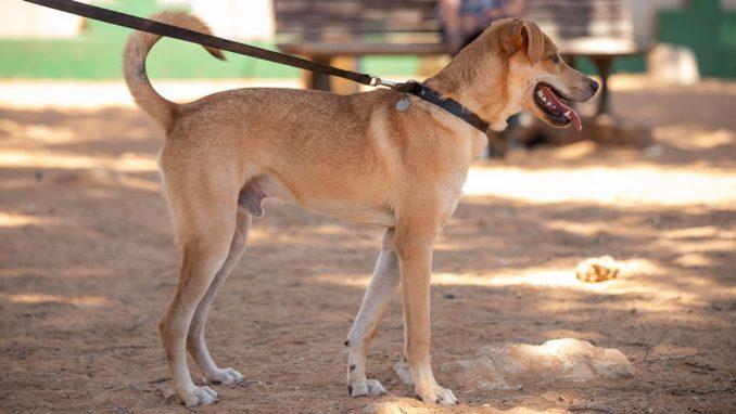 קסם – כלב לאימוץ – אגודת צער בעלי חיים בישראל