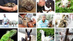 """יומן שבועי לשנת תש""""פ (2020-2019) - אגודת צער בעלי חיים בישראל"""