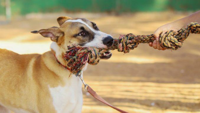בינץ – כלב לאימוץ – אגודת צער בעלי חיים בישראל