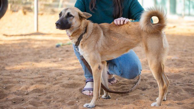 דינה – כלבה לאימוץ – אגודה צער בעלי חיים ישראל