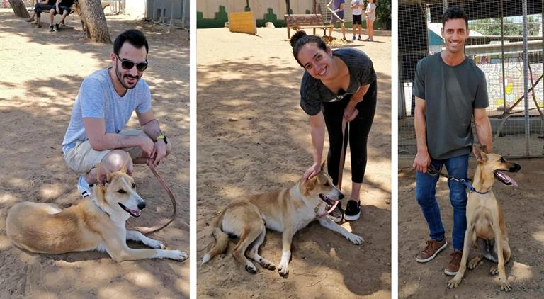 פעילות לחברות - תרומה לקהילה - אגודת צער בעלי חיים בישראל
