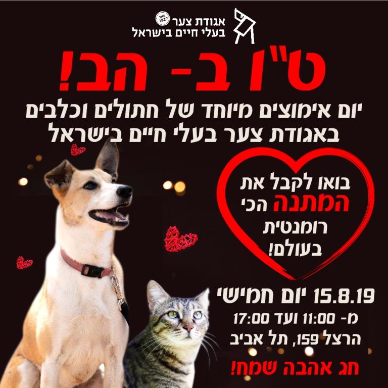 """יום אימוץ – ט""""ו באב – אגודת צער בעלי חיים בישראל"""
