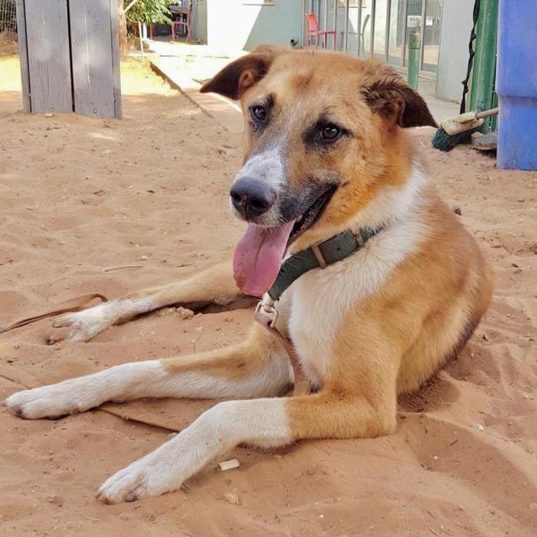 אוסקר - כלב לאימוץ - אגודת צער בעלי חיים בישראל
