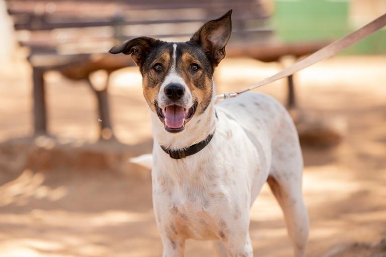 ג'וני - כלב לאימוץ - אגודת צער בעלי חיים בישראל