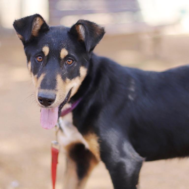 ג'סי - כלבה לאימוץ - אגודת צער בעלי חיים בישראל