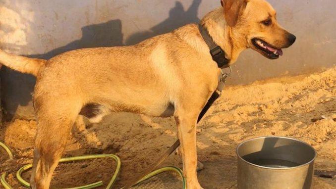 ג'וניור - כלב לאימוץ - אגודת צער בעלי חיים בישראל