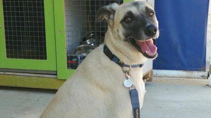 זארה - כלבה לאימוץ - אגודת צער בעלי חיים בישראל