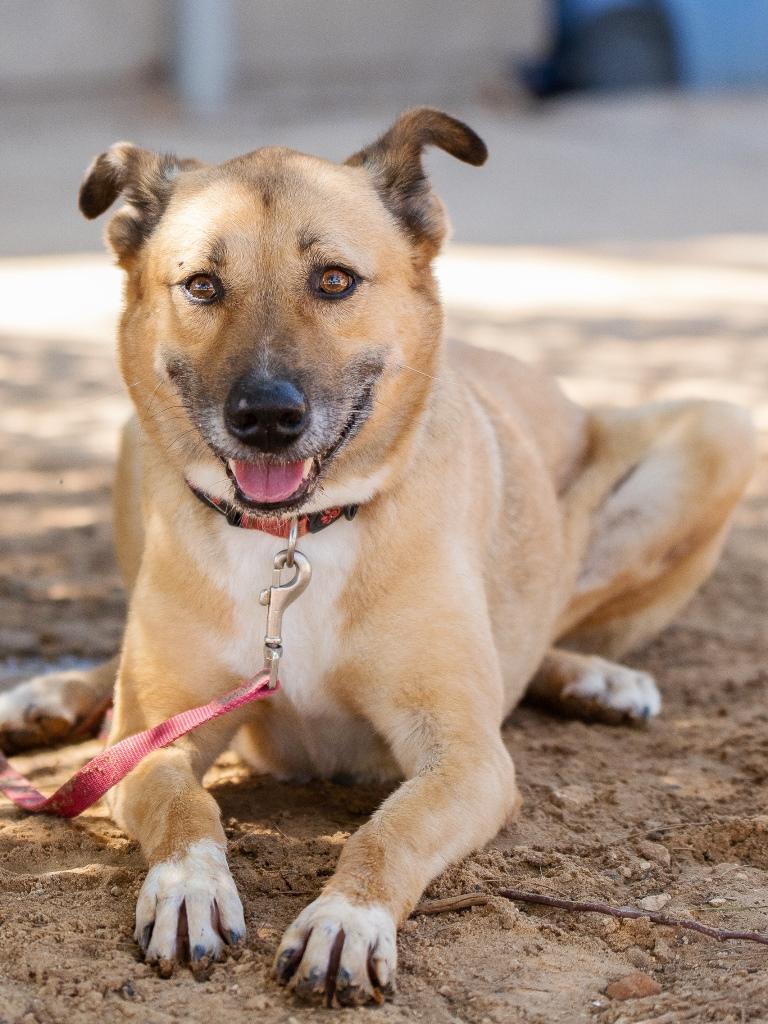 זינה - כלבה לאימוץ - אגודת צער בעלי חיים בישראל