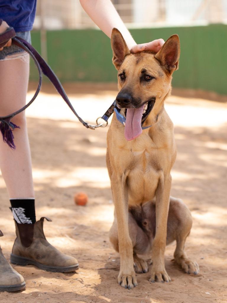 טוני - כלב לאימוץ - אגודת צער בעלי חיים בישראל