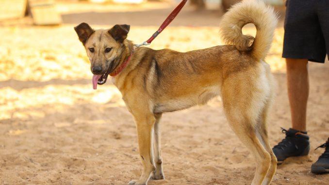 טופי - כלבה לאימוץ - אגודת צער בעלי חיים בישראל
