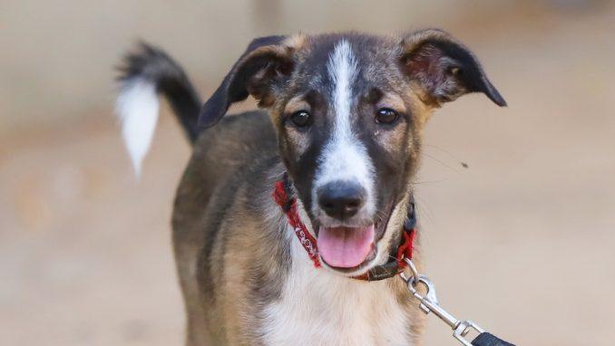 לודוויג – כלב לאימוץ – אגודת צער בעלי חיים בישראל