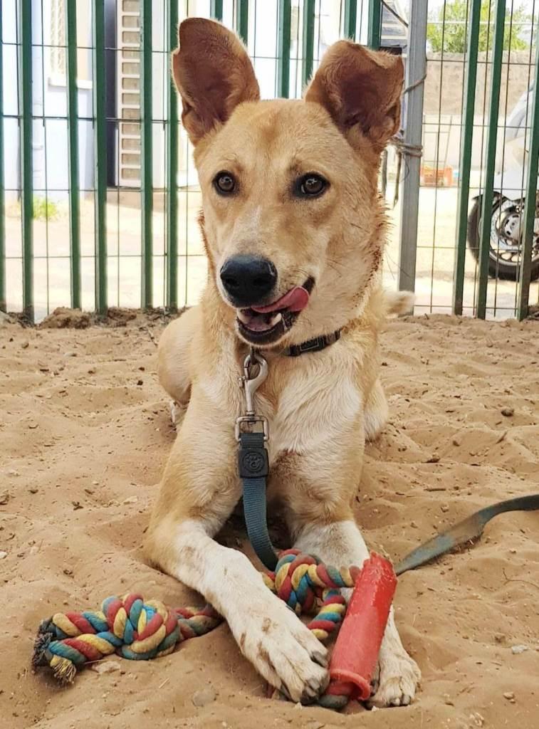 לוק - כלב לאימוץ - אגודת צער בעלי חיים בישראל