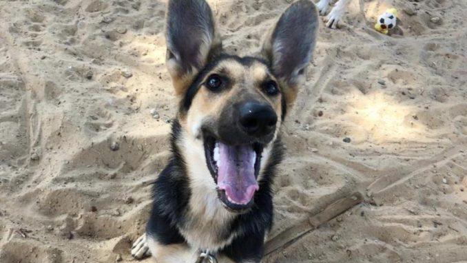 מוניקה - כלבה לאימוץ - אגודת צער בעלי חיים בישראל
