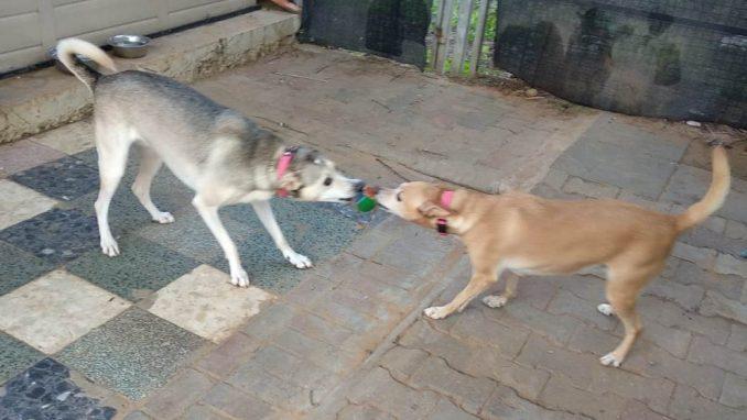 מרגו מוניק - כלבה לאימוץ - אגודת צער בעלי חיים בישראליים בישראל