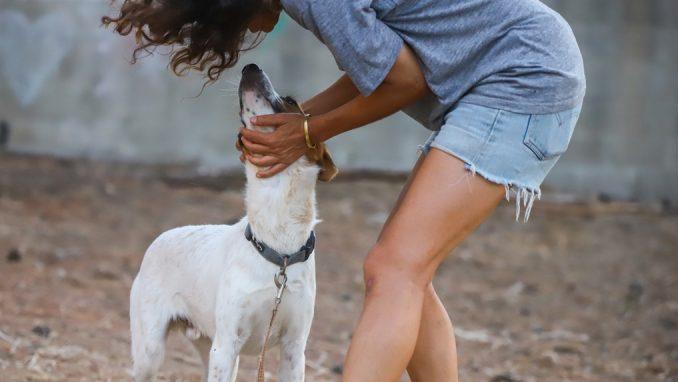סימבה – כלב לאימוץ – אגודת צער בעלי חיים בישראל