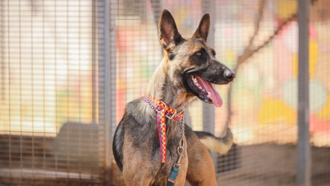 צ'יטה – כלבה לאימוץ – אגודה צער בעלי חיים ישראל