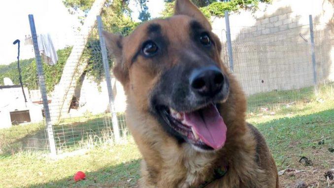 קים – כלבה לאימוץ – אגודה צער בעלי חיים ישראל