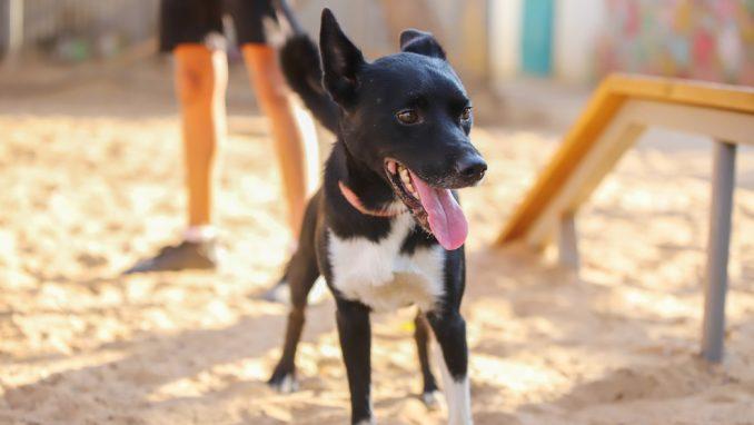 רקסי – כלב לאימוץ – אגודת צער בעלי חיים בישראל