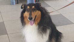 סופה - כלבה לאימוץ - אגודת צער בעלי חיים בישראל