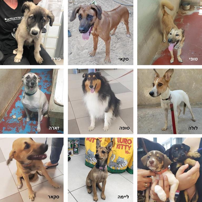 כלבים שננטשו לפני החגים - אגודת צער בעלי חיים בישראל