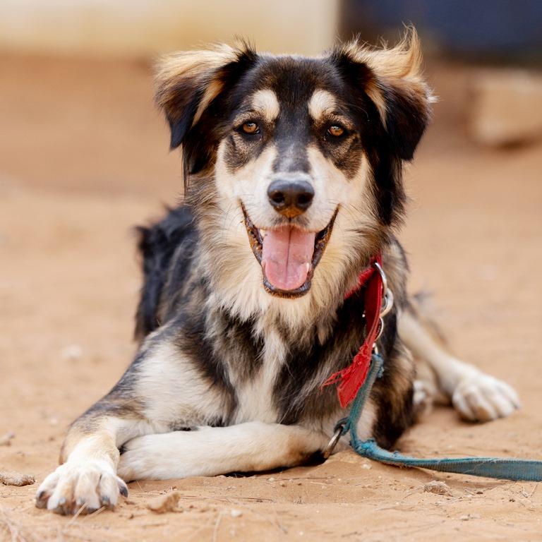 דנוור - כלב לאימוץ - אגודת צער בעלי חיים בישראל