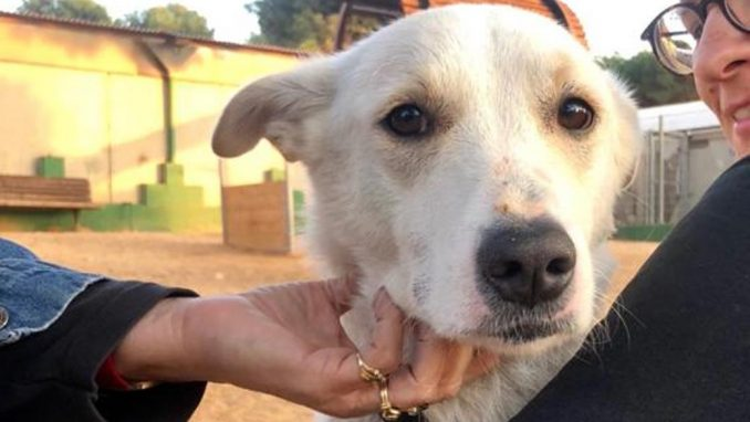 בים - כלב לאימוץ - אגודת צער בעלי חיים בישראל