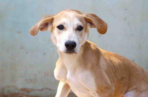 ביסלי - כלב לאימוץ - אגודת צער בעלי חיים בישראל