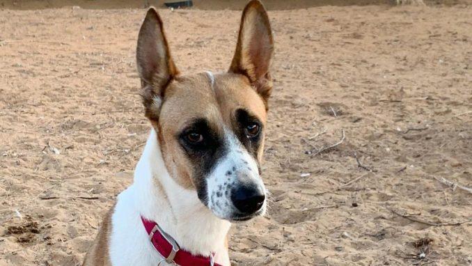 הרלי - כלבה לאימוץ - אגודת צער בעלי חיים בישראל