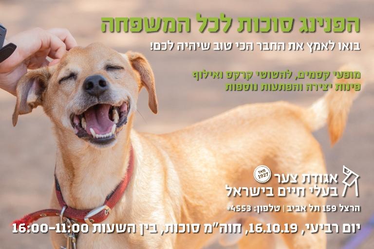 יום אימוץ סוכות 2019 - אגודת צער בעלי חיים בישראל - צילום מאיה סיני