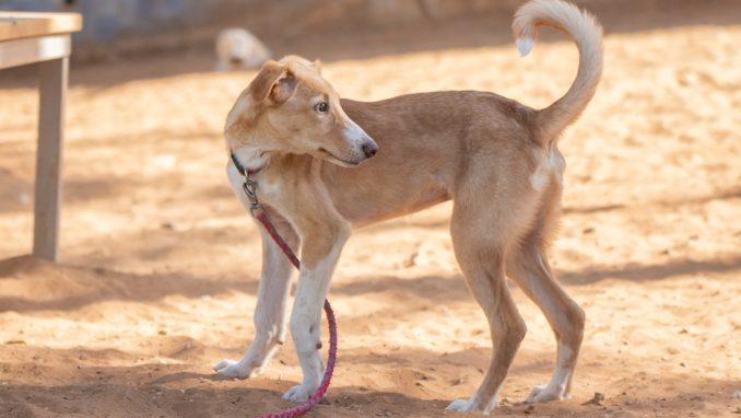 כוכב – כלב לאימוץ – אגודה צער בעלי חיים ישראל