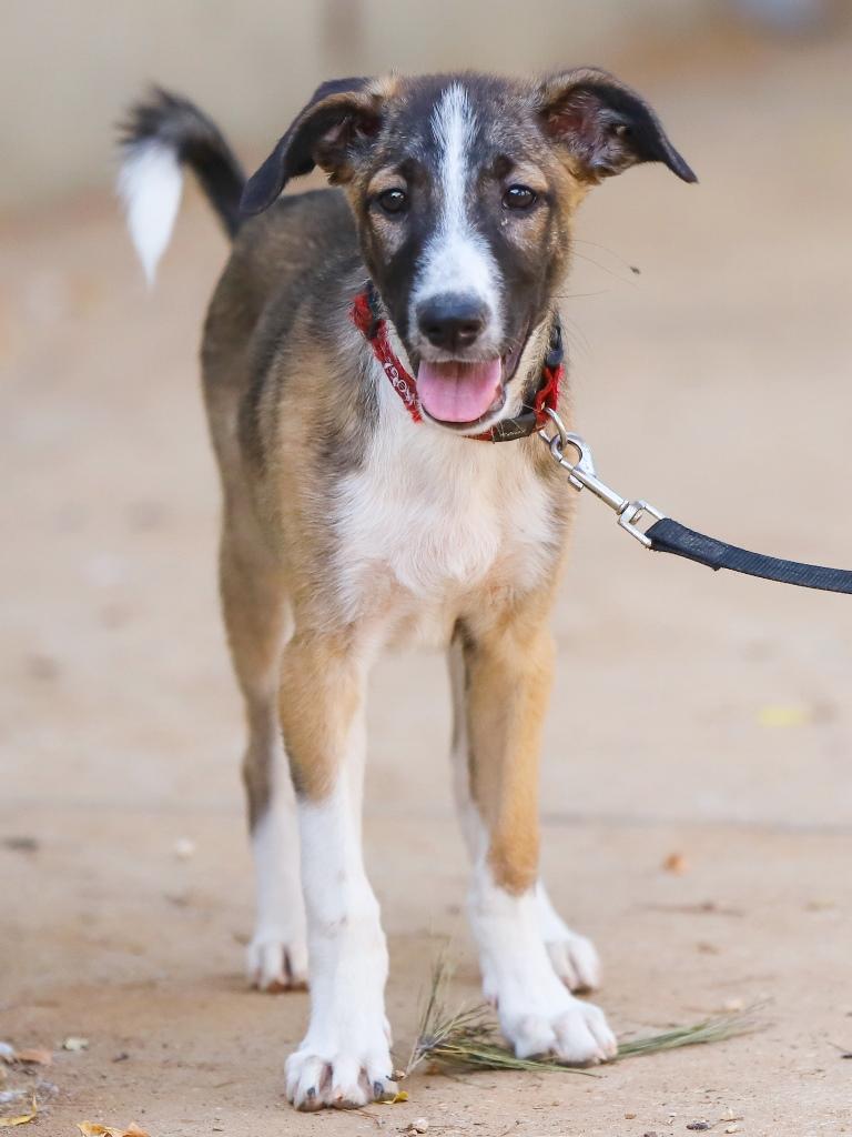לודוויג - כלב לאימוץ - אגודת צער בעלי חיים בישראל