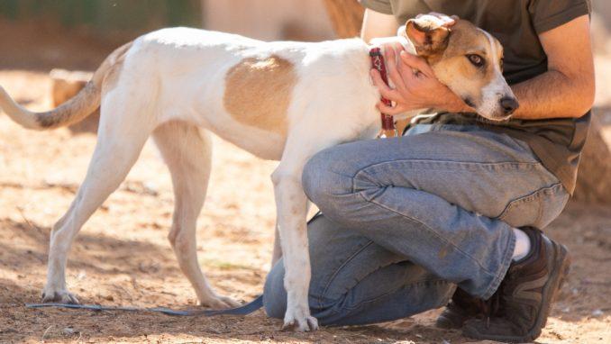 לולה – כלבה לאימוץ – אגודה צער בעלי חיים ישראל