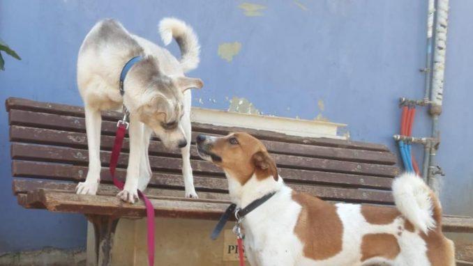 לוסי אליס - כלבה לאימוץ - אגודת צער בעלי חיים בישראל