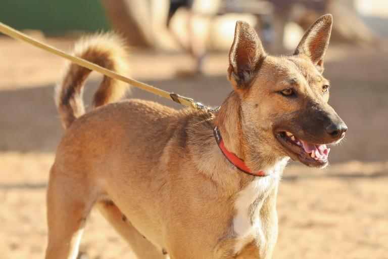 קייסי - כלבה לאימוץ - אגודת צער בעלי חיים בישראל