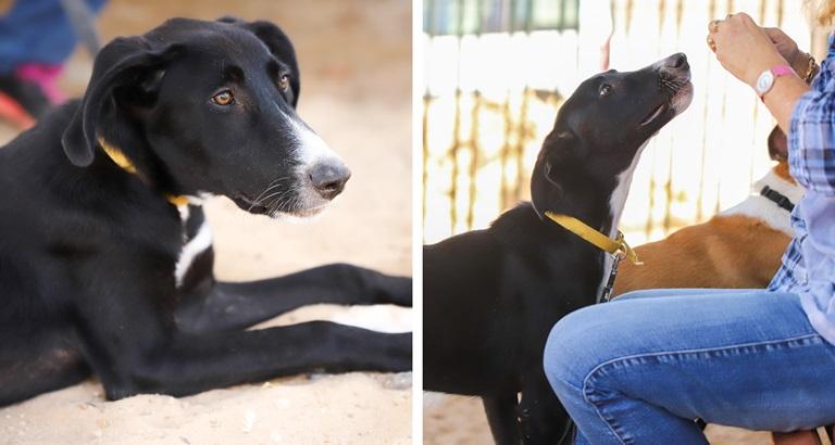רוקי - כלב לאימוץ - אגודת צער בעלי חיים בישראל