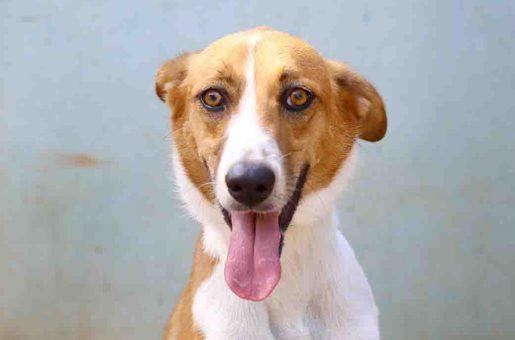 לוסי - כלבה לאימוץ - אגודת צער בעלי חיים בישראל