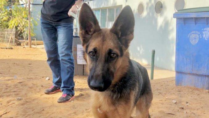 טום - כלב לאימוץ – אגודת צער בעלי חיים בישראל