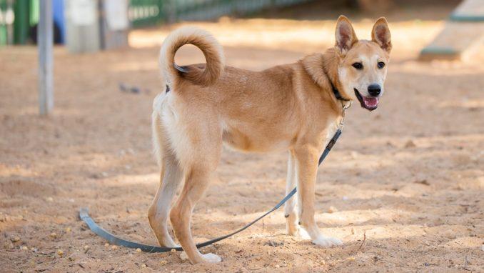 טום - כלב לאימוץ - אגודת צער בעלי חיים בישראל