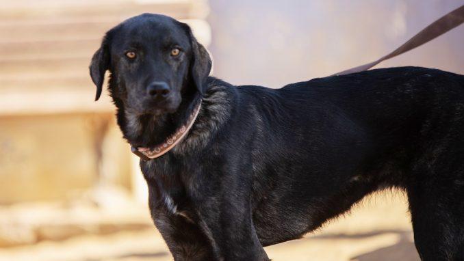מיני – כלבה לאימוץ – אגודה צער בעלי חיים ישראל