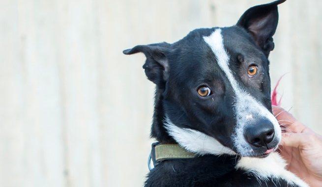 מיילס - כלב לאימוץ - אגודת צער בעלי חיים בישראל