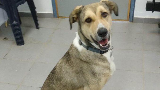 בלה - כלבה לאימוץ - אגודת צער בעלי חיים בישראל