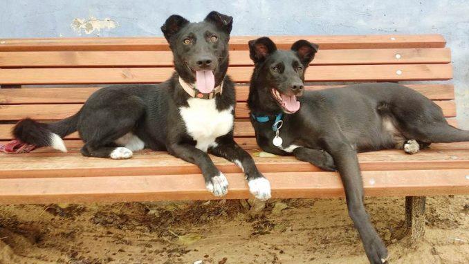 ג'ו בלאק - כלב לאימוץ - אגודת צער בעלי חיים בישראל