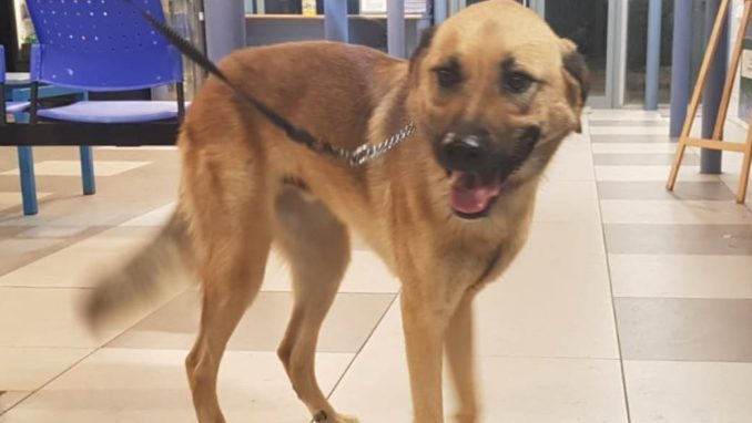 לאקי – כלב לאימוץ – אגודת צער בעלי חיים בישראל