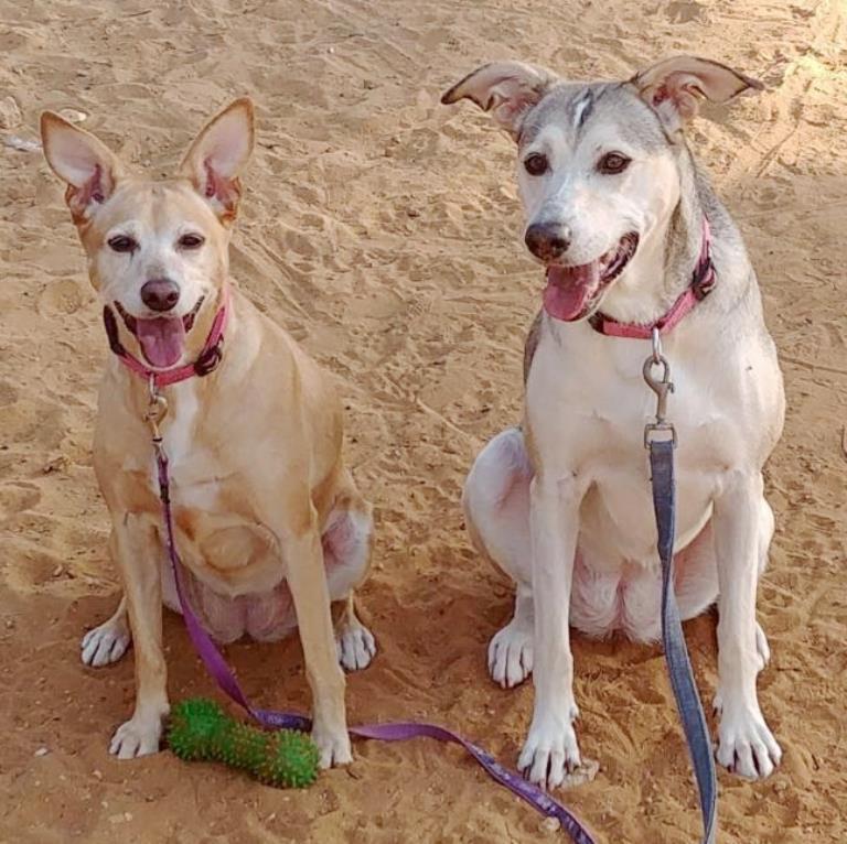 מרגו ומוניק - כלבות לאימוץ - אגודת צער בעליחיים בישראל