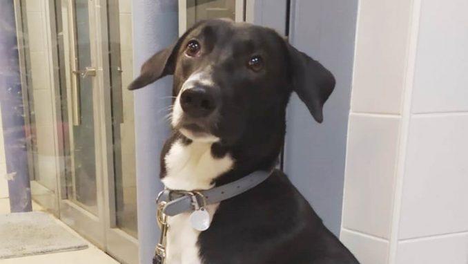 סטיילס - כלב לאימוץ - אגודת צער בעלי חיים בישראל