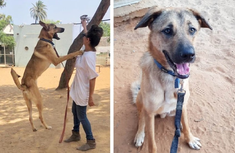 סימבה - כלב לאימוץ - אגודת צער בעלי חיים בישראל