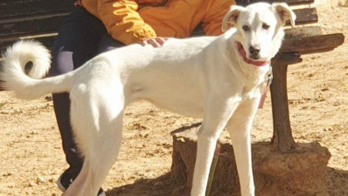פינקי - כלבה לאימוץ - אגודת צער בעלי חיים בישראל
