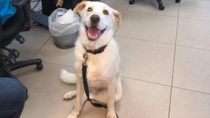 צ'ארלי - כלב לאימוץ - אגודת צער בעלי חיים בישראל