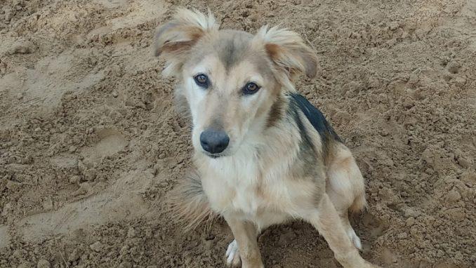 בל -כלבה לאימוץ - אגודת צער בעלי חיים בישראל