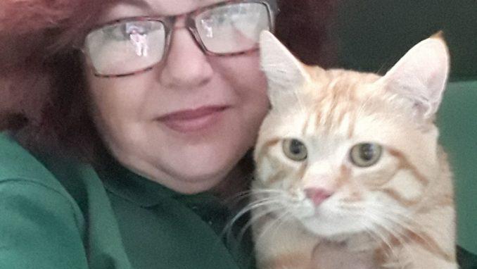 ברי - חתול לאימוץ - אגודת צער בעלי חיים בישראל